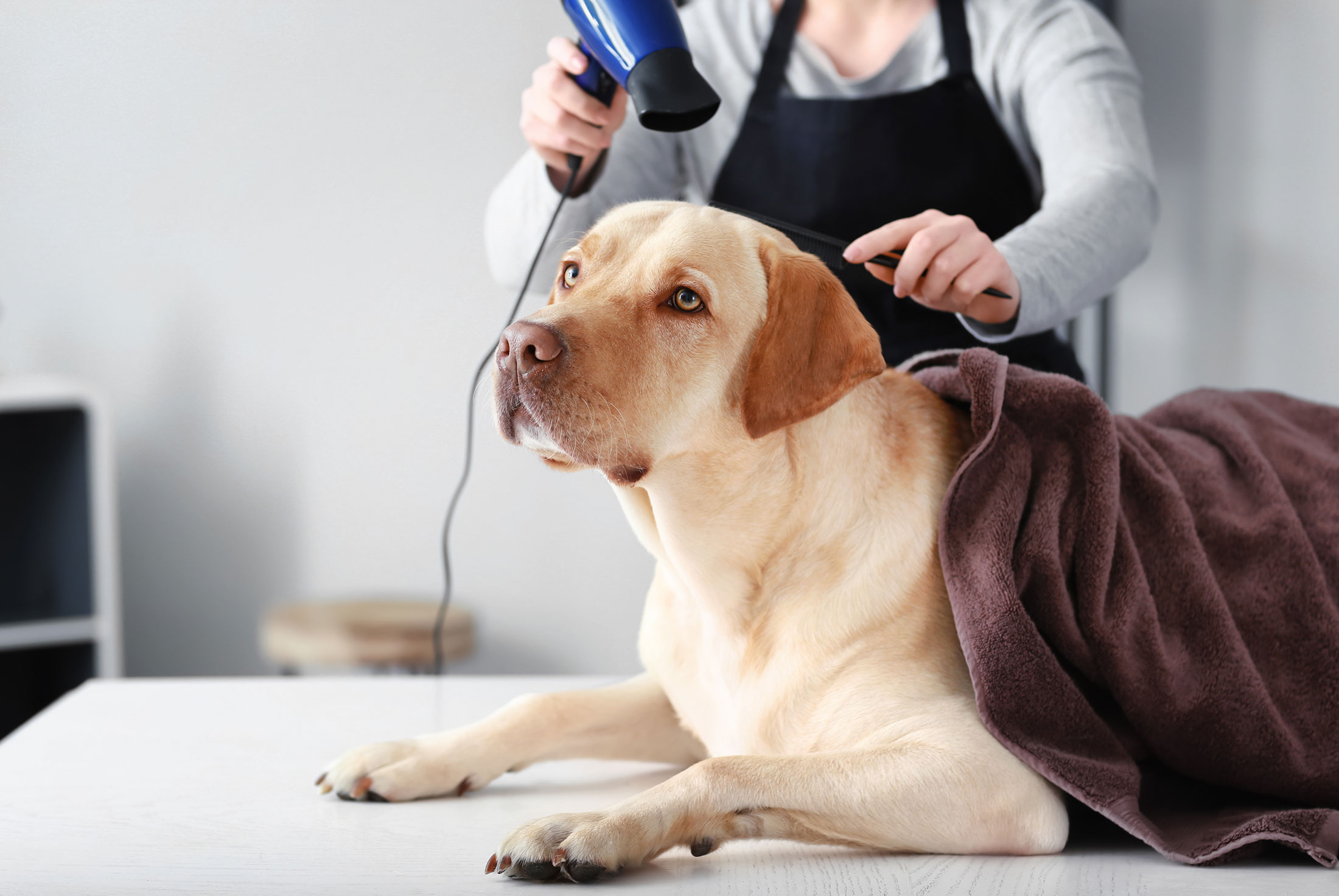 Best Pet Grooming in Parkland