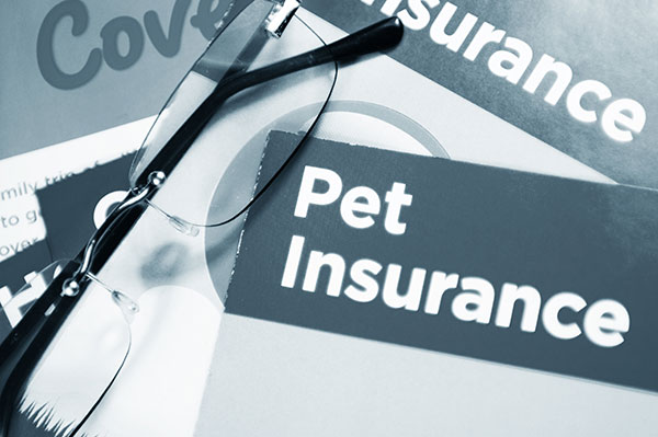 Pet Insurance in Golden Gate