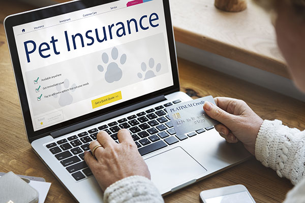 Why you need pet insurance in [lcation]