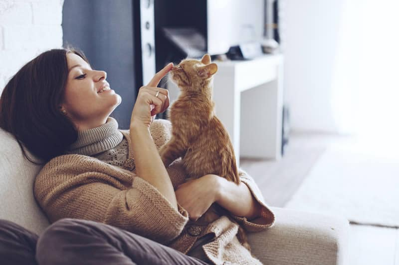 Wellington cat sitter | The very best pet sitting