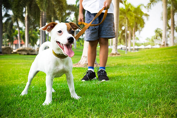 Coconut Creek Dog Walker