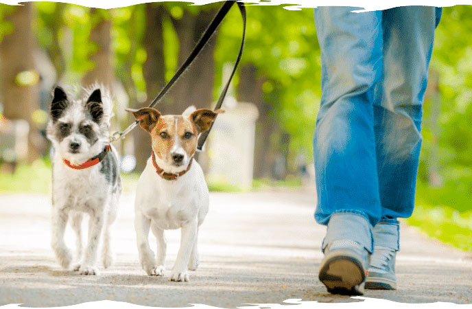 Cape Coral dog walking